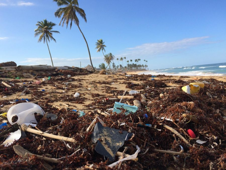 Punta Cana beach located in the Dominican Republic is covered in trash. This picture was taken by Dustan Woodhouse. Credit: Unsplash.com